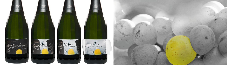 Champagne Gantois-Louvet, cuvée l'Âme des Blancs