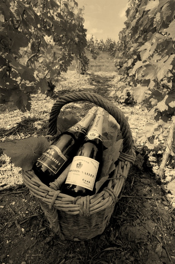 Panier Gantois-Vallet dans les vignes